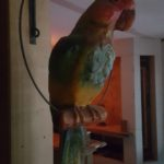 Carved Hanging Polly Bird